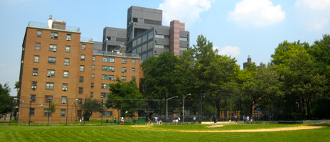 Lafayette Gardens Brooklyn Artdoxa Community For